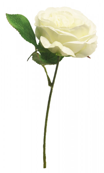 Rose 28cm, creme