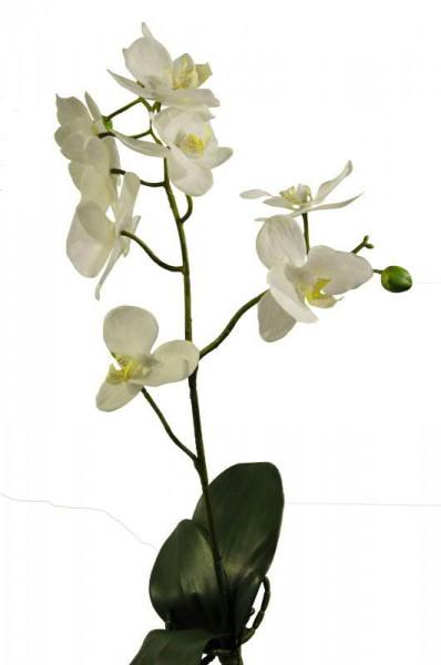 Phalaenopsis mit Blatt 48cm, creme
