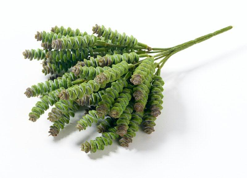 459daa288c Sukkulente Sedum 25cm, grün | Sukkulenten | Seidenblumen & Beiwerk |  Sortiment | Deko | Klocke-Online