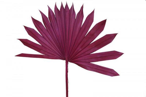 Palm Sun Cut nicht farbecht, brombeer