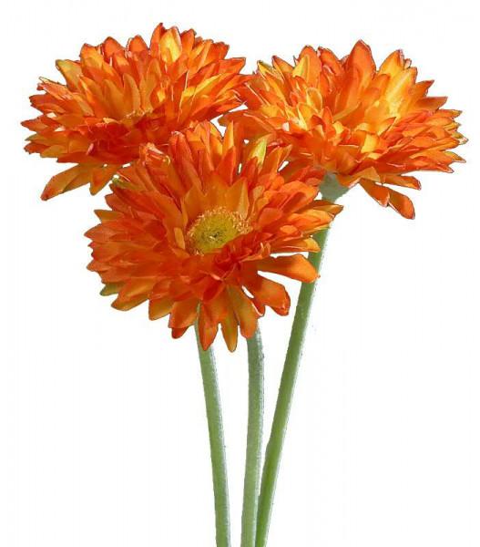 Gerbera 30cm x3, orange