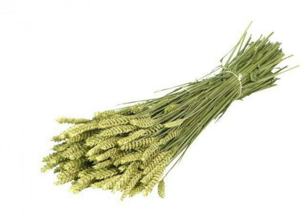 Weizen/Tarwe, natur