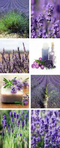 Banner 75x180cm Lavendel
