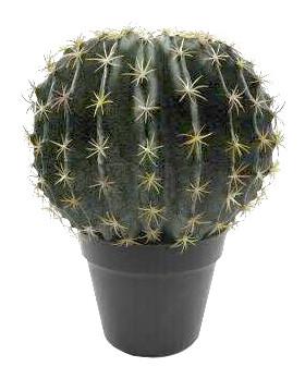 Kaktus im Topf 34cm, grün