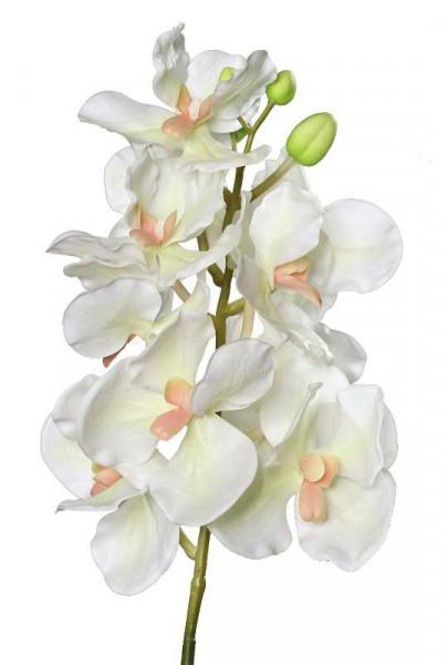 Orchidee 74cm Wanda, grün/creme