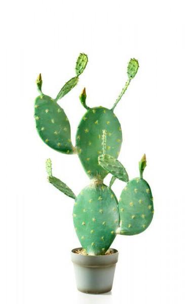 Kaktus SP im Topf 76cm, grün