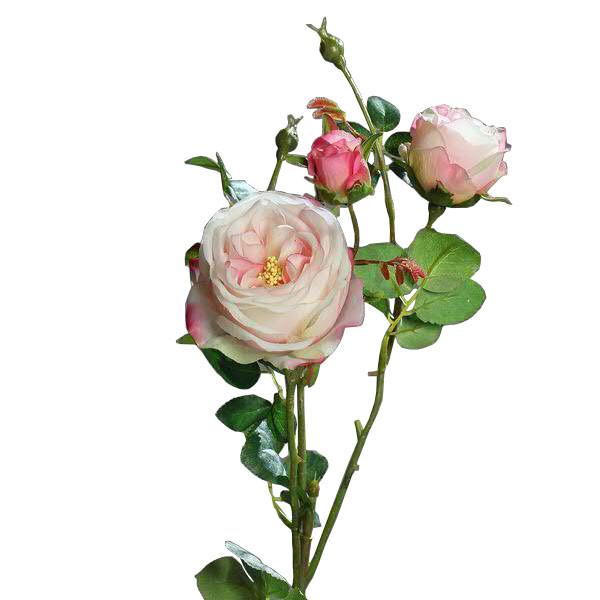 Rose verzweigt 60cm, pink/weiß