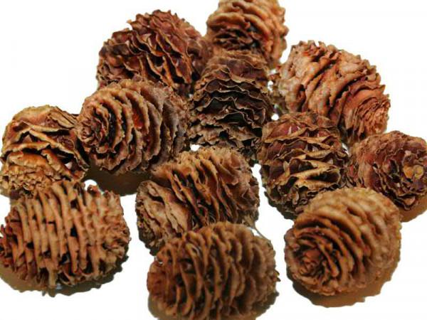 Strictum Cones, natur