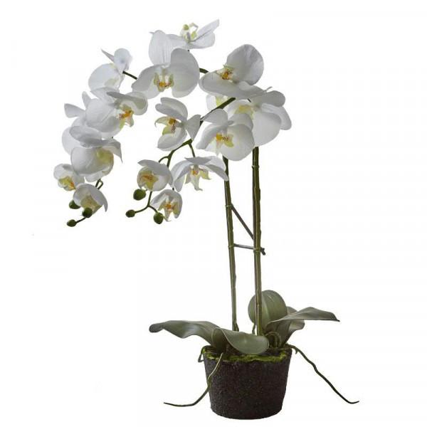 Phalaenopsis mit Ballen 58cm, weiß