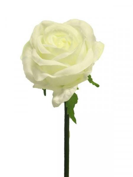 Rose 46cm, creme