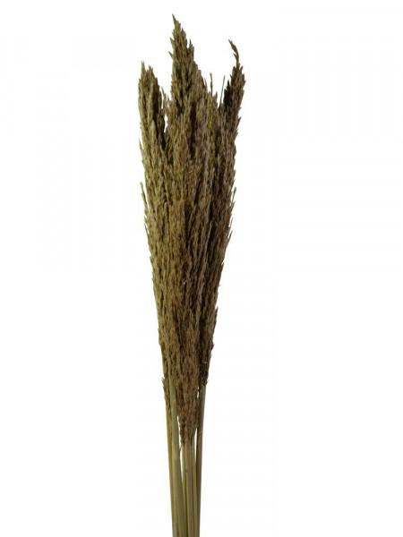 Zebra Gras 10St.80-100cm, natur