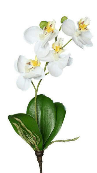 Phalaenopsis mit Blatt 26cm, creme