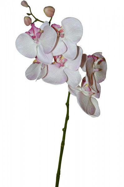 Phalaenopsis 61cm 6Blüten, pink