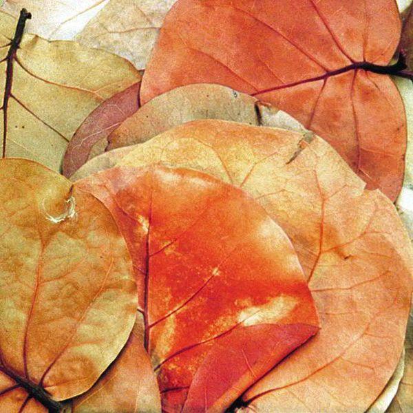 Hoja Blätter sort.560St. 60groß/300mittel/200klein, natur