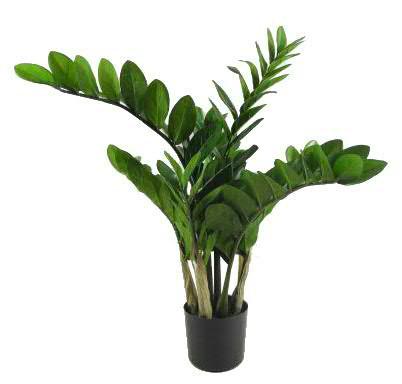 Zamioculcas im Topf 90cm x9 166 Blätter, grün