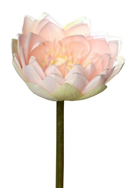 Seerose 74cm, pink