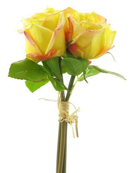 Rosebund x3 30cm, gelb