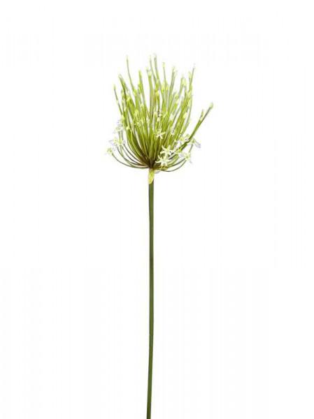 Allium H100cm, weiß | Allium | Einzelblumen | Seidenblumen & Beiwerk ...