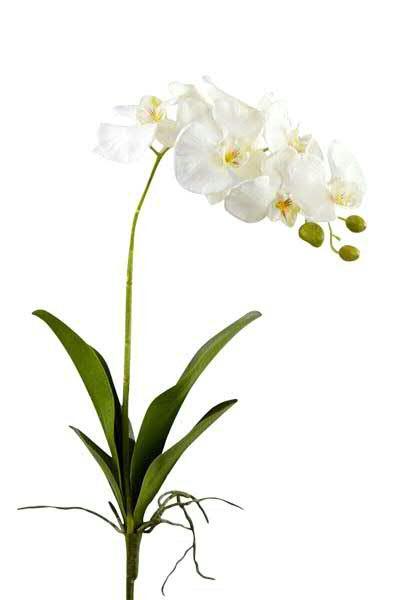 Phalaenopsis mit Blatt 79cm, weiß