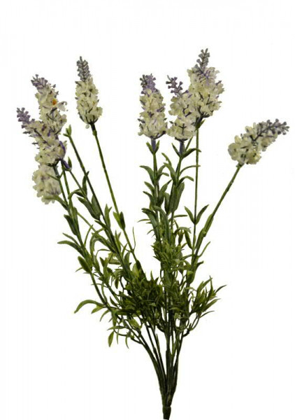 Lavendel Busch 40cm, creme