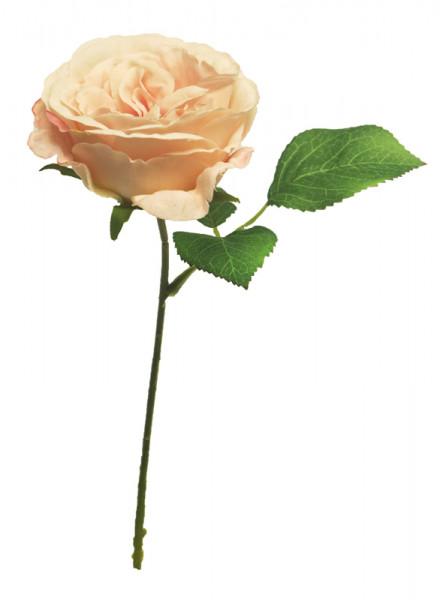 Rose 28cm, pink