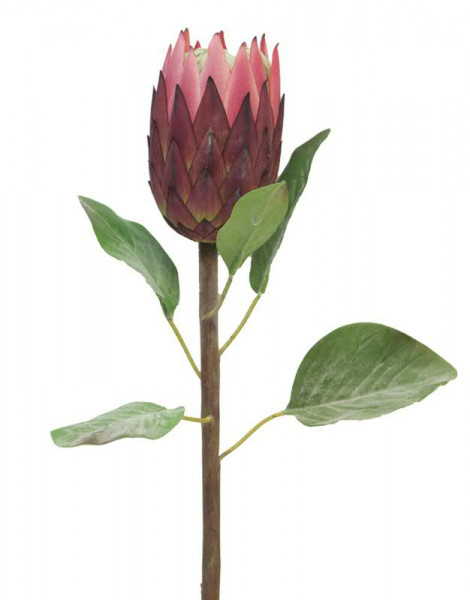 Protea 67cm, rot