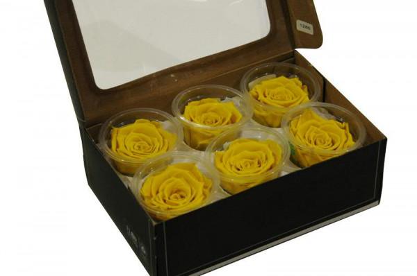 Rose stabilisiert D6cm groß, gelb