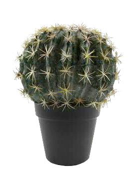 Kaktus im Topf 25cm, grün