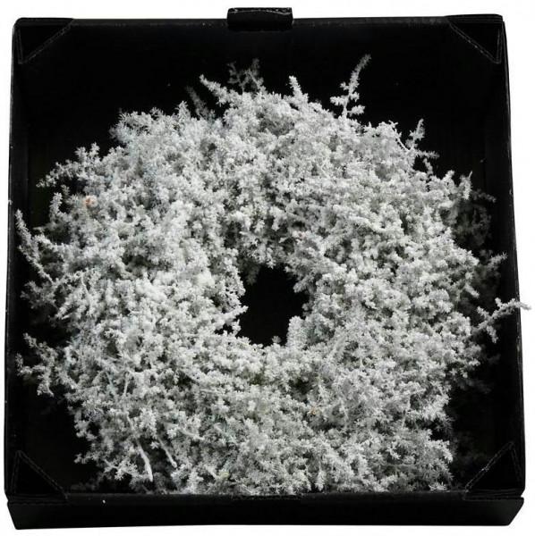 Kranz Asparagus 35cm gewachst, schneeweiß