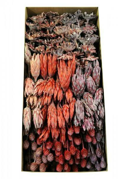 Sortiment Flora 2 frosted 270St., lavendel