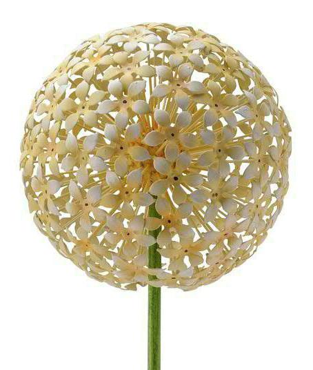 Gartenstecker Allium 20x120cm, gelb