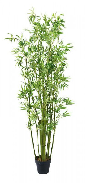 Bambus Pflanze 180cm 1400blatter Grun Bambus F S Fruhjahr