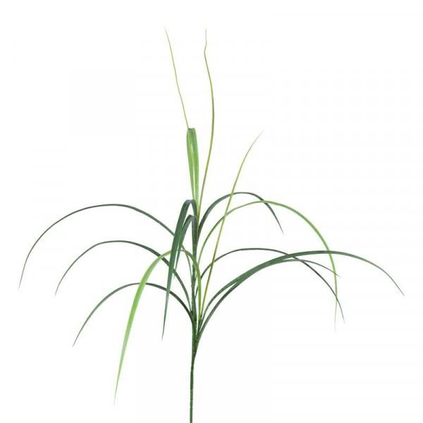 Gras SP 117cm Affengras, grün