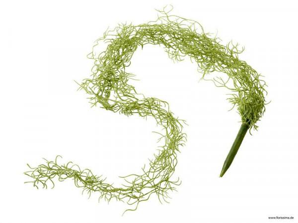 Tillandsia Hänger 110cm, hellgrün