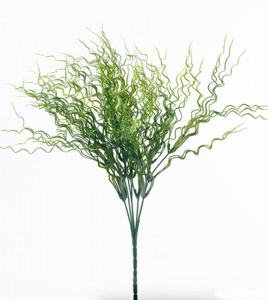 Gras Busch 40cm Juncus Spiralis, Korkenzieherbinse, grün
