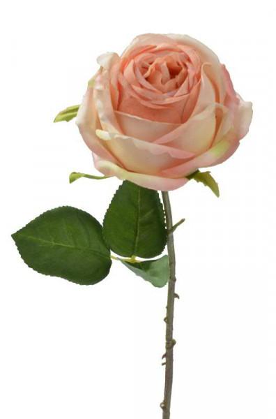 Rose 46cm, apricot