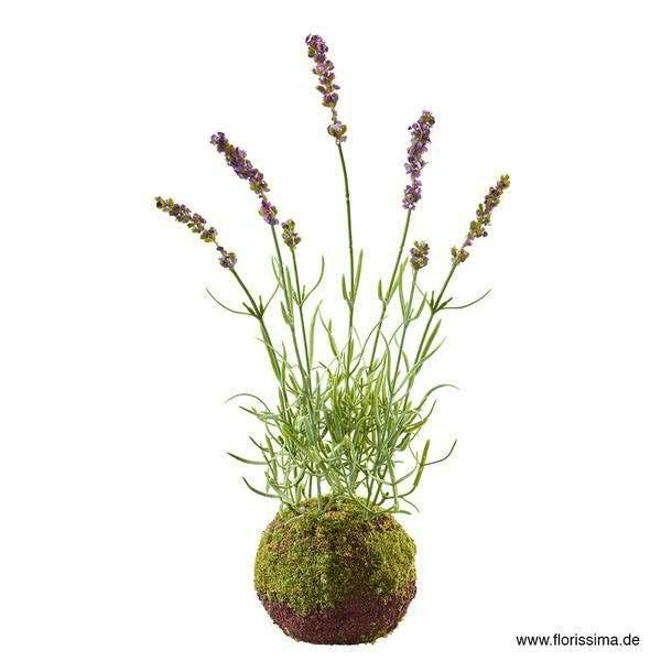 Lavendel auf Moosballen 41cm, braun/grün