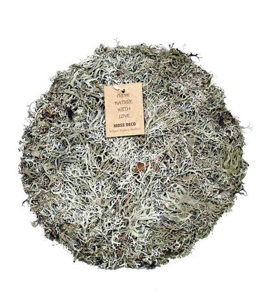 Flechtenmoos Platte 40cm, natur