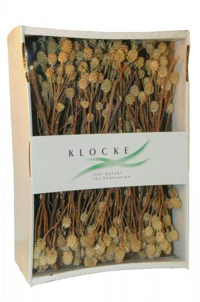 Salignum Zweige 100St. FPK, natur
