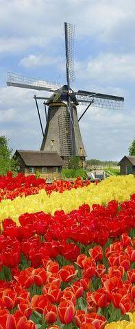 Banner 75x180cm Windmühle