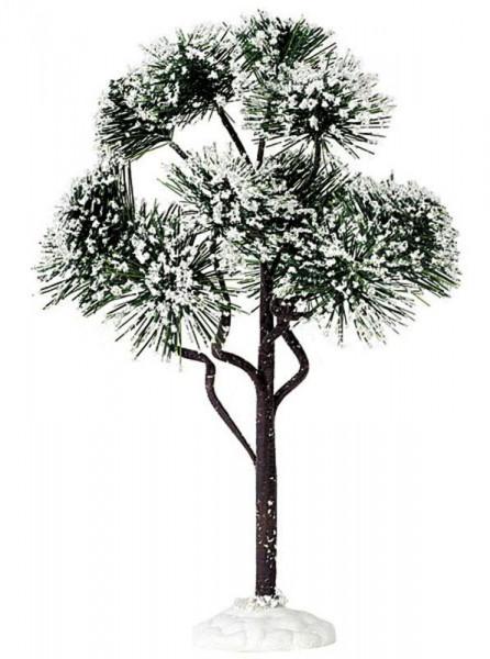 Mountain Pine large