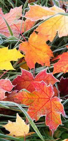 Banner 90x180cm Blätter/Frost
