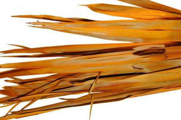 Palm Blätter SP 400g, apricot