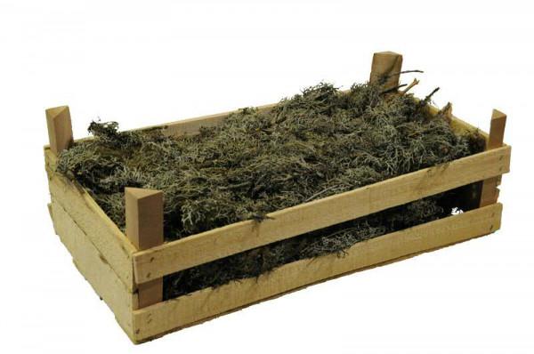 Oak Moss Branch 60x30x20cm, natur