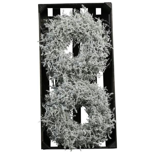 fa84d664a9 Kranz Asparagus 25cm gewachst, weiß | Kränze gewachst | Naturkränze ...