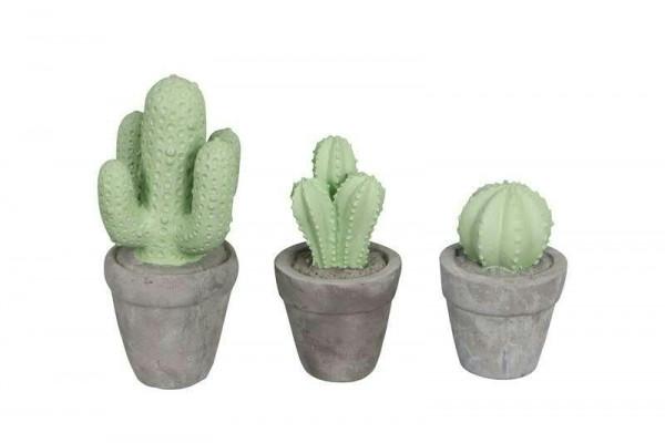Kaktus SP Zement 9-11x12-21cm sort., grau/grün