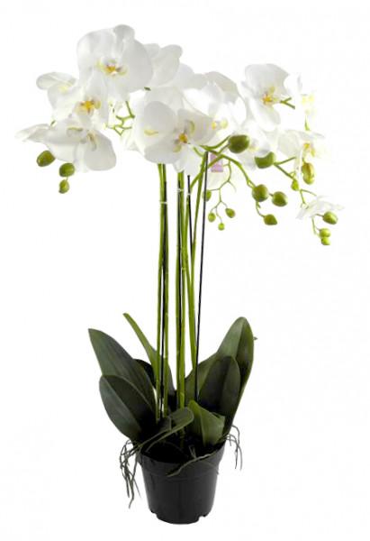 Phalaenopsis im Topf 92cm x6, weiß