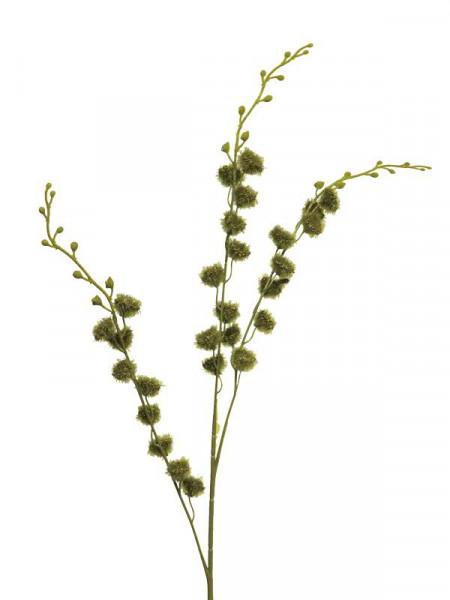 Ceanothus Zweig SP 100cm, grün