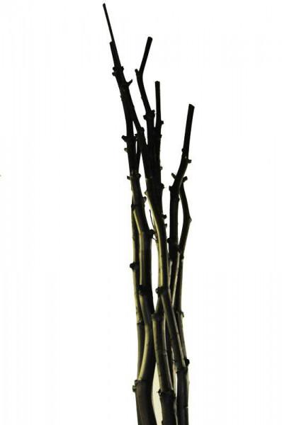 Fenchel Bündel ca.180cm 7Stck., schwarz