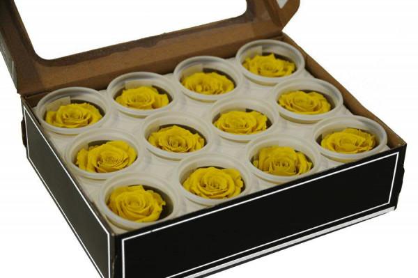 Rose stabilisiert D4cm klein, gelb